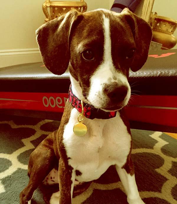 Image of Boglen Terrier
