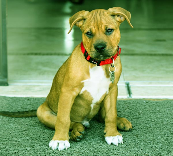 Image of Bullboxer Pit