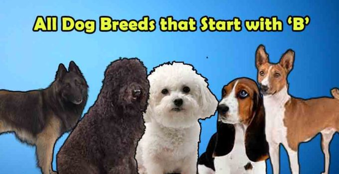 all dog breeds that start with alphabet B