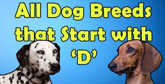 all dog breeds that start with alphabet D.