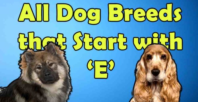 All dog breeds that start with alphabet E