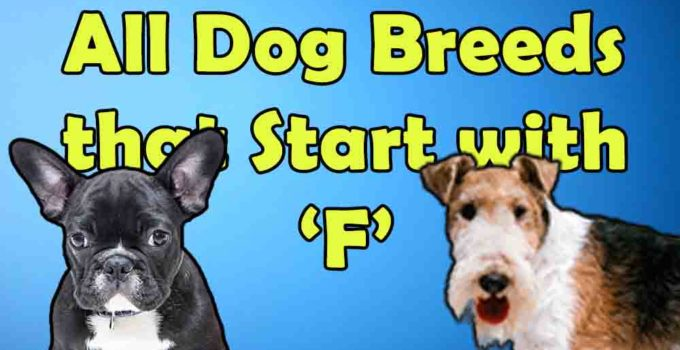 all dog breeds that start with alphabet F