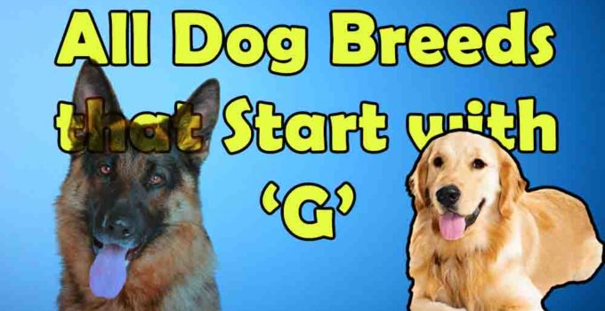 all dog breeds that start with alphabet G