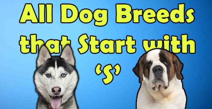 all dog breeds that start with alphabet S