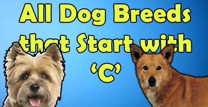 all dog breeds that start with alphabet C