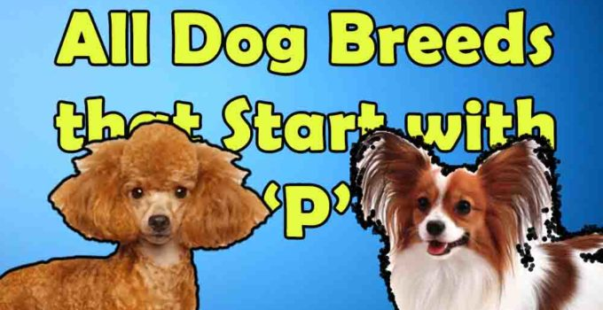 all dog breeds that start with P